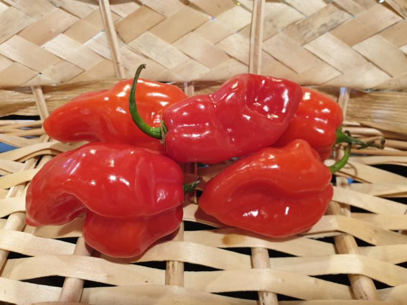 Habanada Peper Rood | Haba-nada, Niet scherpe pepers!  | Scolville 0 | 200gr