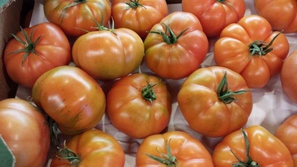 Rebellion tomaten /  NL / 500GRAM