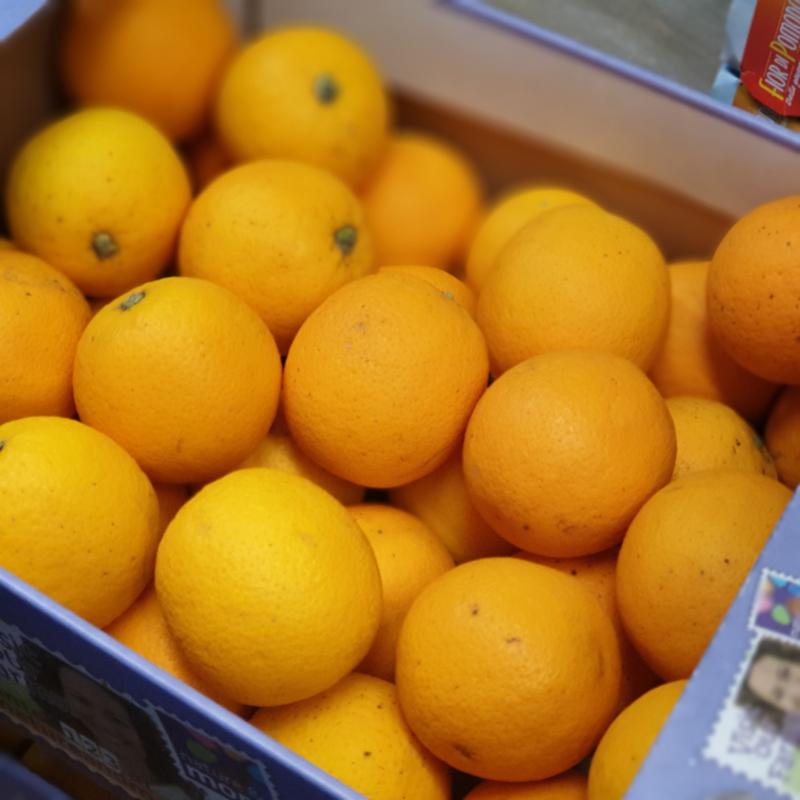 Sinaasappelen | Pers | Friszuur | teelt: bio - Spanje | doos 6,5 kg (KLEINE MAAT)