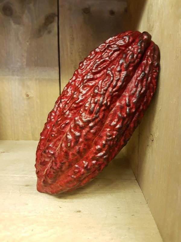 Cacaovruchten / verse cacaopeulen / cacao vers / Cabossen / Variëteit: Trinitario - Ecuador /  1 stuks (ca 600-800gram)