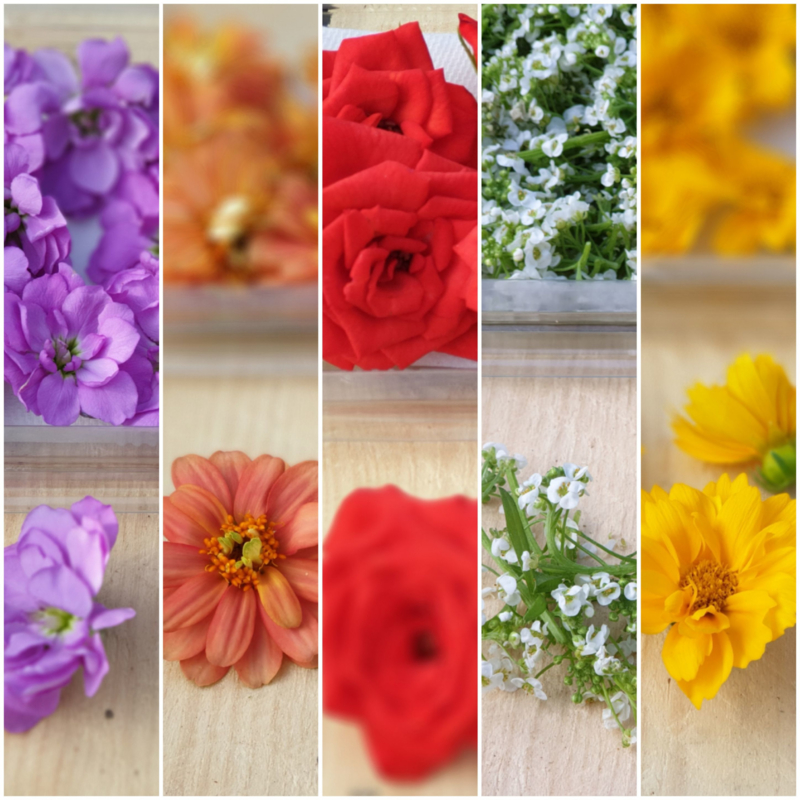 Bloemenmix / Eetbare bloemen / Israel / 4x kleuren en soorten, totaal ca 60-65 stuks bloemen