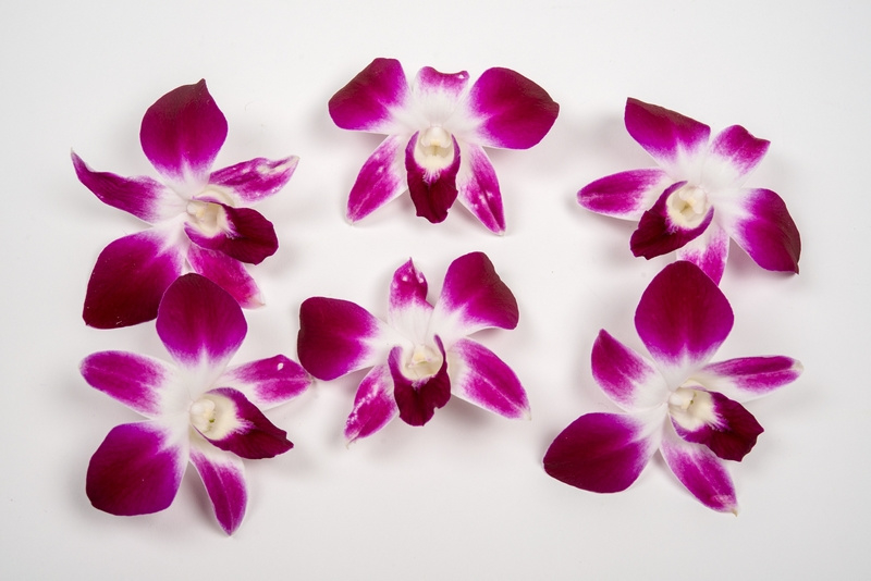 Orchideeën / Karma | Thailand | doos 100stuks