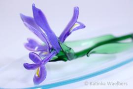 Glazen bloemen