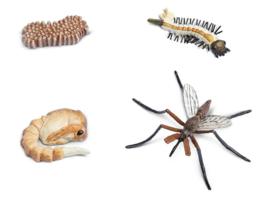 Safari Speelset Levenscyclus Mug 4-delig