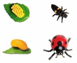 Safari Speelset Levenscyclus Lieveheersbeestje 4-delig
