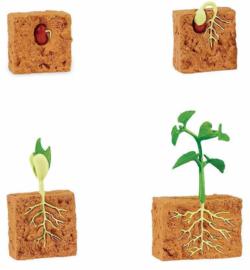 Safari Speelset Levenscyclus Bonenplant 4-delig