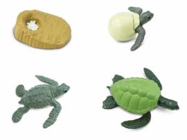 Safari Speelset Levenscyclus Schildpad 4-delig