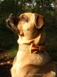 Leren hondenhalsband: The Bowbow!