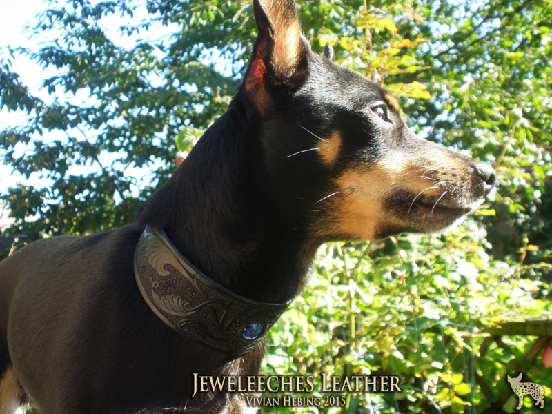 Hondenhalsband ´mi Laila´ zwart of bruintinten
