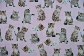 Tricot kittens digitale print