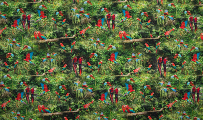 Tricot parrots in jungle digitale print