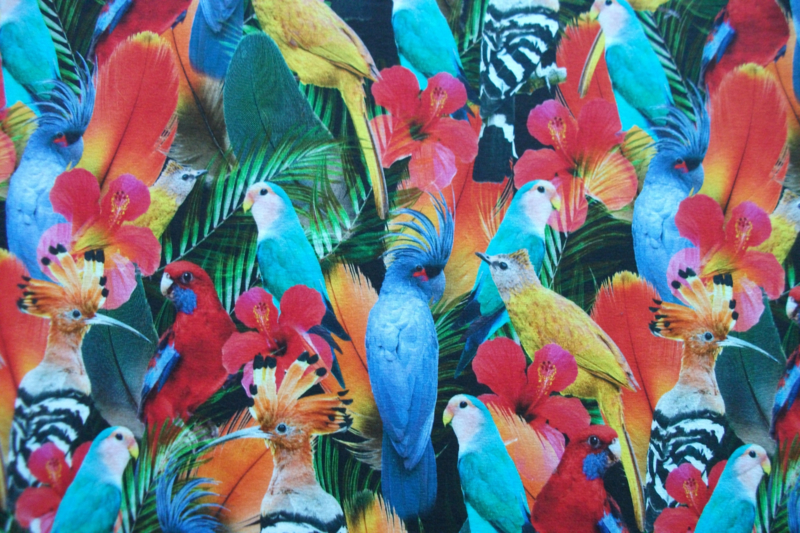 Tricot parrots digitale print