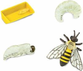 Safari Levenscyclus - Honing Bij