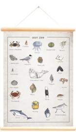Little and Pure Schoolplaat Aan Zee / Alfabet - Jasper de Ruiter (dubbelzijdig)