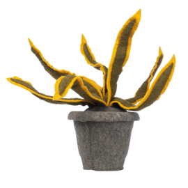 KidsDepot Kamerplant Vilt - Sanseveria Yellow