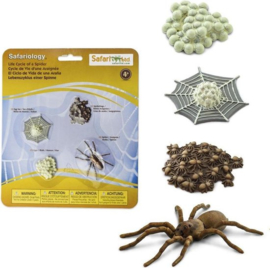 Safari Levenscyclus - Spin
