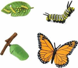 Safari Levenscyclus - Monarch Vlinder