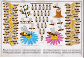 Uitgeverij Lannoo Het Bijenboek - Piotr Socha