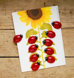 Yellow Door Activiteitenkaarten Leren Tellen Lieveheersbeestje (16 kaarten) + 3jr