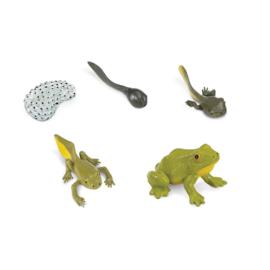 Safari Levenscyclus - Kikker