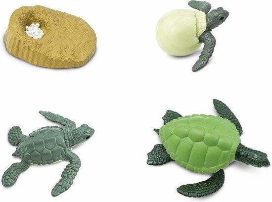 Safari Levenscyclus - Groene Zeeschildpad
