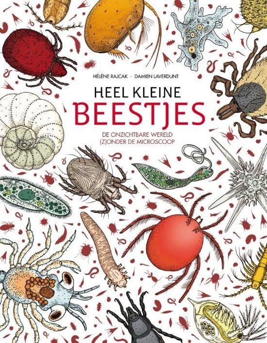 Uitgeverij Fontaine Heel Kleine Beestjes - Damien Laverdunt
