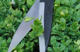 Okatsune snoeischaar ST216 Karikomi Basami, 515 mm