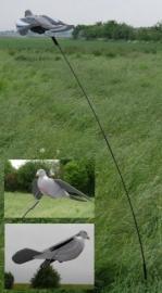 Bouncher met duif