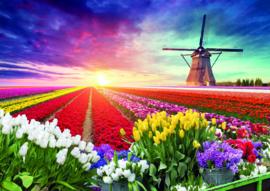 10 stuks poster op karton molen kleurig tulpenveld POS-0042 posters (20.8Cm / 29.5Cm)
