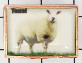 PIN_NH3.006 schaap Texel