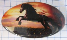 Haarspeld ovaal HAO 512, witte paarden, 8 cm