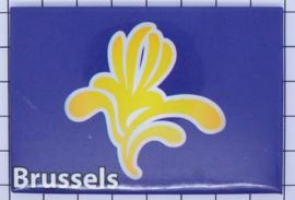 koelkastmagneet Brussels N_BX018
