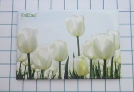 10 stuks  koelkastmagneet Holland   MAC:20.122 witte tulpen