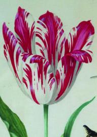 10 stuks poster op karton tulp rijksmuseum POS-0051 posters(20.8Cm / 29.5Cm)