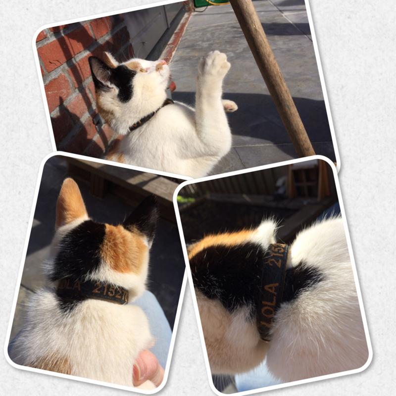Katten halsband