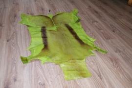 Springbok groen