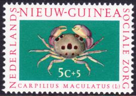 Plaatfout Ned. Nieuw Guinea 78 P  Postfris