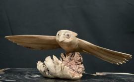 Vliegende uil op parasiet hout, 26cm