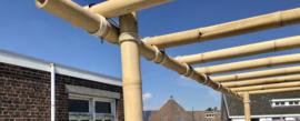 Bamboe paal gemiddeld 10cm diameter en 500 cm lang