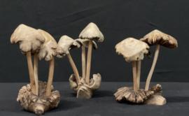 Paddenstoelen groepje van 3 stuks, 10cm