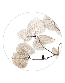 Muurcirkel gedroogde bladen