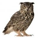 Forest Friend owl   muursticker
