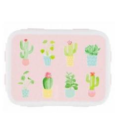 Brotdose Cactus