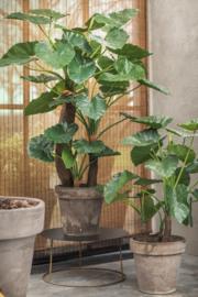 Alocasia groen 170 cm