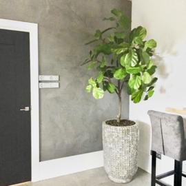Ficus green 152 cm. Leverbaar in verschillende hoogtes.
