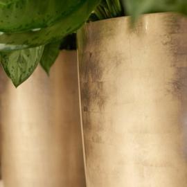 Vase light gold. Prijs excl plant.
