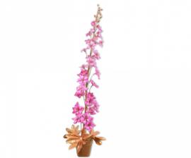 Plant goud/roze 82 cm
