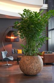 Bowl wood 40x47. Prijs excl plant.