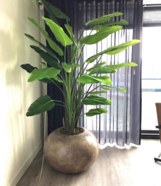 Strelizia plant, zijden, GIO (183cm en 243cm)