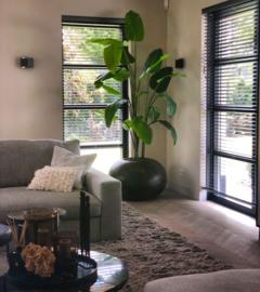Strelitzia plant, zijden, in verschillende maten.